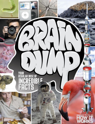 Brain Dump Issue 022