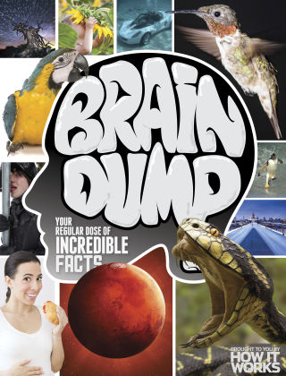 Brain Dump Issue 020