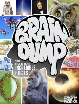 Brain Dump Issue 021