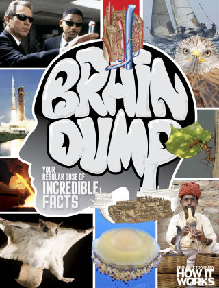 Brain Dump Issue 019