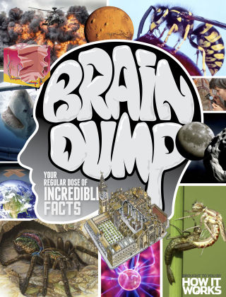 Brain Dump Issue 018