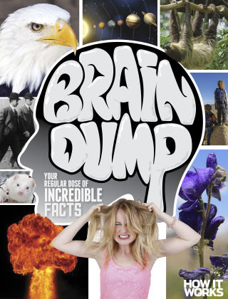 Brain Dump Issue 017
