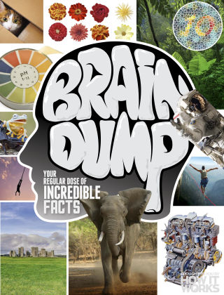 Brain Dump Issue 023