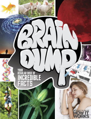 Brain Dump Issue 024
