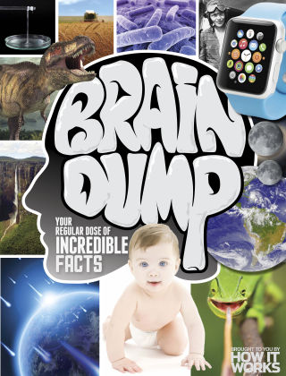 Brain Dump Issue 25