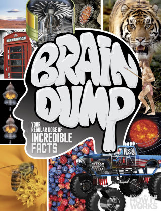 Brain Dump Issue 026