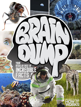 Brain Dump Issue 027
