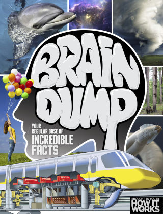 Brain Dump Issue 028