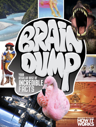 Brain Dump Issue 029