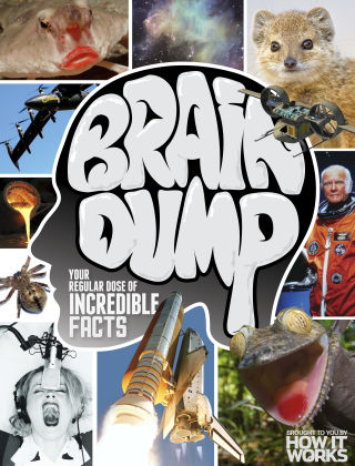 Brain Dump Issue 030