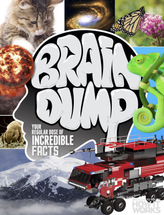 Brain Dump Issue 031