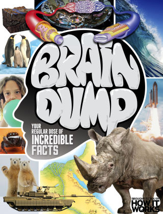 Brain Dump Issue 032