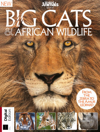 World Of Animals Book Of Big Cats & African Wildlife 5th Edition