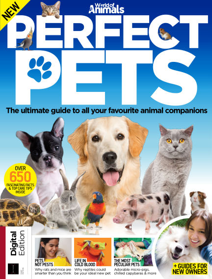 World of Animals Perfect Pets
