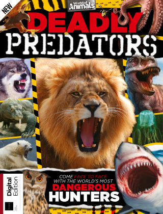 World of Animals Deadly Predators 1st Edition