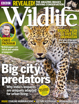 BBC Wildlife Dec 2014