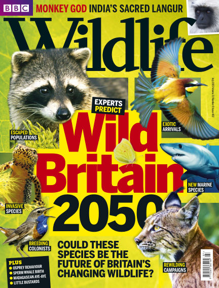 BBC Wildlife July 08, 2015 00:00