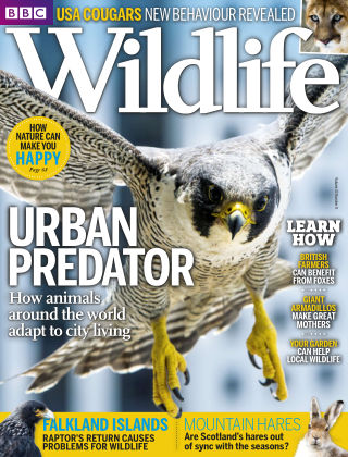 BBC Wildlife Aug 2015