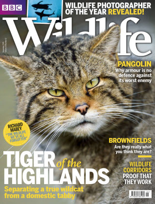 BBC Wildlife Nov 2015