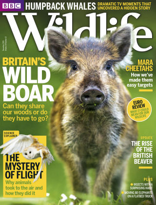 BBC Wildlife Dec 2015