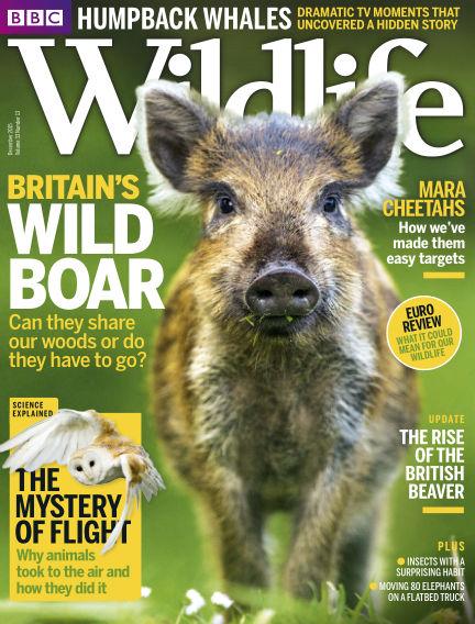 BBC Wildlife November 25, 2015 00:00