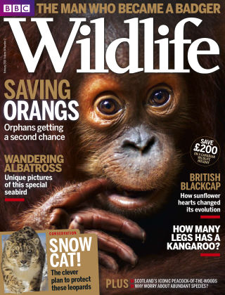 BBC Wildlife Feb 2016