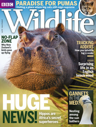 BBC Wildlife July 2016