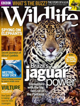 BBC Wildlife Sept 2016