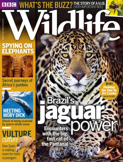 BBC Wildlife August 31, 2016 00:00