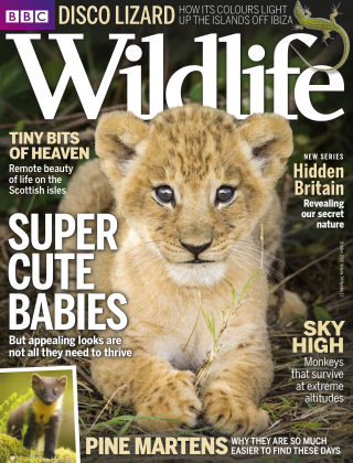 BBC Wildlife Oct 2016