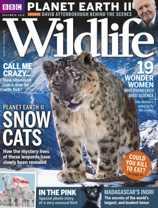 BBC Wildlife Nov 2016