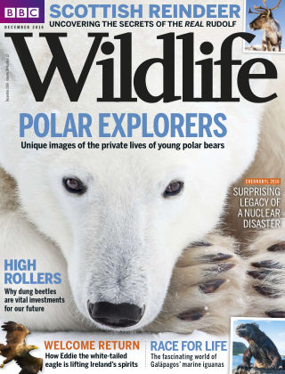 BBC Wildlife Dec 2016