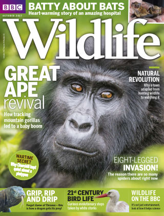 BBC Wildlife October 2017