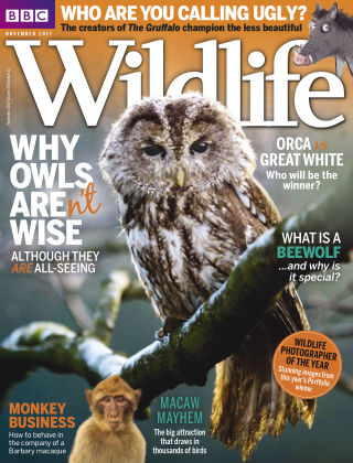 BBC Wildlife November 2017