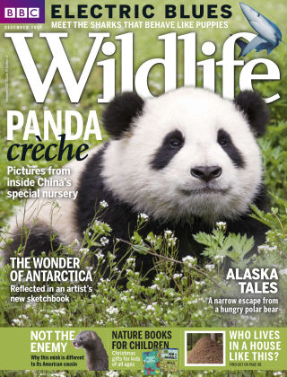 BBC Wildlife December 2017