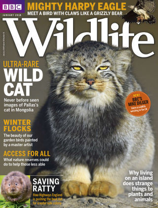 BBC Wildlife January 2018