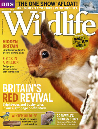 BBC Wildlife February 2018
