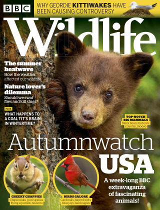 BBC Wildlife October2018