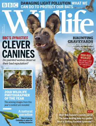 BBC Wildlife November2018