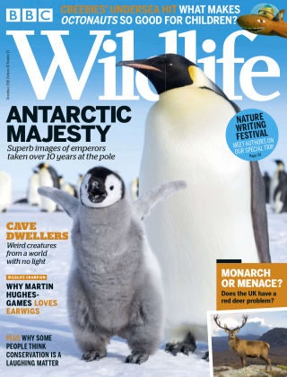 BBC Wildlife December2018