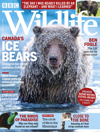 BBC Wildlife February2019