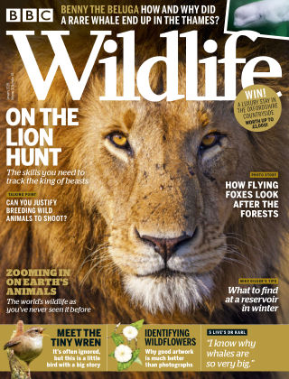 BBC Wildlife January2019