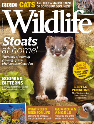 BBC Wildlife Spring2019
