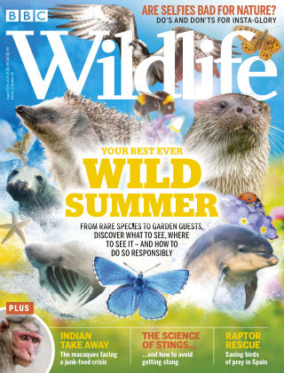 BBC Wildlife August2019