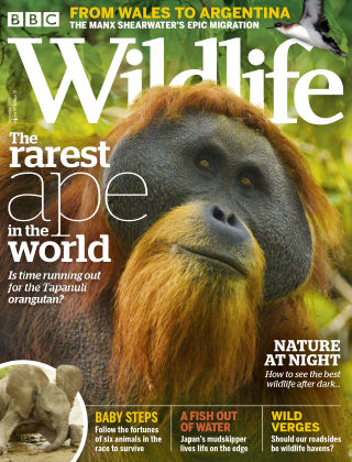 BBC Wildlife September2019