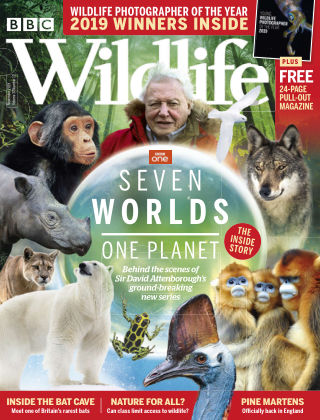 BBC Wildlife November2019