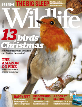 BBC Wildlife December2019
