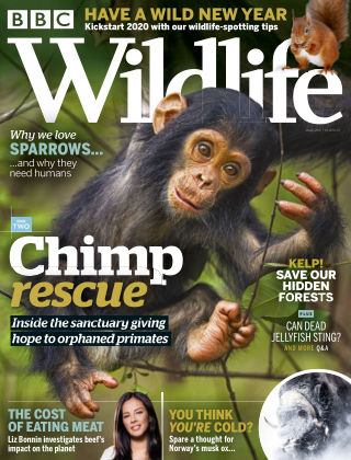 BBC Wildlife January2020