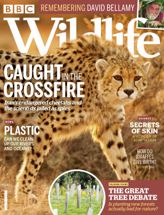 BBC Wildlife February2020