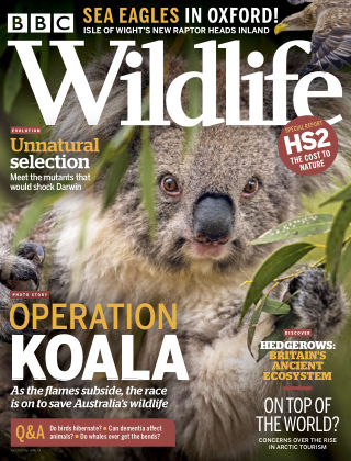 BBC Wildlife April2020